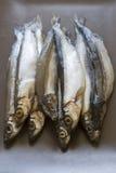 Raw fish capelin Royalty Free Stock Photography