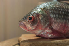 Raw fish carp on a kitchen cutting Board.  with red eyes.  head.  place for  label. Raw fish carp on a kitchen cutting Board. Fish with red eyes. Fish head. A Royalty Free Stock Photo
