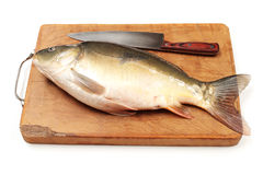 Raw fish carp Stock Images
