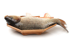 Raw fish carp Royalty Free Stock Image