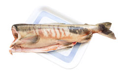 Raw fish chum. On white Stock Images