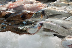 Raw  fish on  counter. Raw  fish on market counter Royalty Free Stock Images