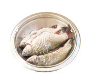 Raw fish crucian in a metal bowl. Raw peeled carp on white Stock Photography