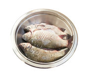 Raw fish crucian in a metal bowl. Raw peeled carp on white Royalty Free Stock Photo