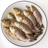 Raw fish crucian. Raw fish on a white background Stock Photography