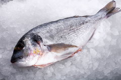 Raw fish dorado Royalty Free Stock Photos