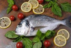 Raw fish Dorado Stock Image
