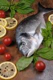 Raw fish Dorado Stock Photography