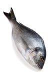 Raw fish Dorado Stock Photo