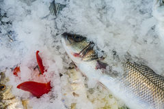 Raw fish on fish market near restaurant Royalty Free Stock Photography