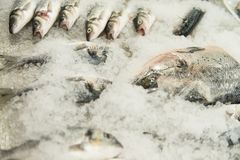 Fresh Fish on Ice in the Market. Raw Fish After Fishing on Crash Ice Royalty Free Stock Photo