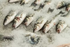 Fresh Fish on Ice in the Market. Raw Fish After Fishing on Crash Ice Stock Image