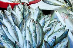 Raw fish in the food market Stock Image