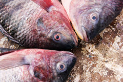 Raw fish Royalty Free Stock Photos