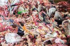 Raw Fish garbage Royalty Free Stock Image