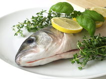 Raw fish with herbs. Fresh sea bass raw fish with herbs on a white plate Stock Photos