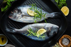 Raw fish with herbs and spices Royalty Free Stock Photos