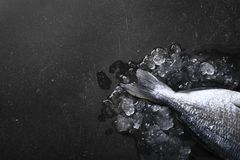 Raw fish with ice on kitchen table. Raw fish with ice on dark kitchen table, top view Stock Images