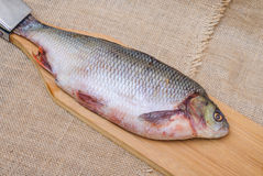 Raw fish ide. On a chopping Board stock images