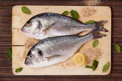 Raw fish with ingredients on wooden board. Two raw freash sea bream fish on wooden cutting board with cooking ingredients, fresh herbs basil, salt crystal and Royalty Free Stock Image