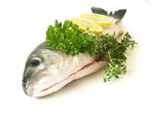 Raw fish, isolated. Closeup of raw sea bass fish on studio isolated background royalty free stock photos