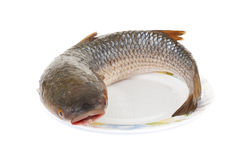 Raw fish isolated on white background Royalty Free Stock Photo