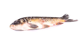 Raw fish. Stock Images