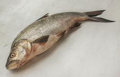 Raw fish on the kitchen table. Before evisceration Stock Photography