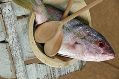 Fish in decorated platter, ready to prepare. Raw fish known as red in Brazil, on plate Royalty Free Stock Photos