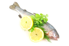 Raw fish with lemon and dill isolated Royalty Free Stock Photos
