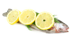 Raw fish with lemon and dill isolated Royalty Free Stock Photography