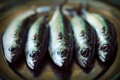Raw fish Royalty Free Stock Photography