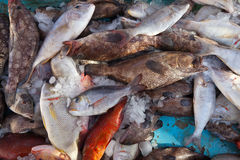 Raw  fish on market counter Stock Images