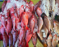 Raw  fish on market counter Royalty Free Stock Photo