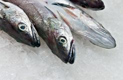 Raw fish. Fish market seafood royalty free stock photos