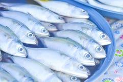 Raw fish at the market Royalty Free Stock Photography