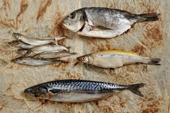 Raw Fish Mix of Capelin, Mackerel, Dorado, Sardinella Royalty Free Stock Images