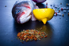 Raw fish, onion, lemon and spices on a black table. Toned Royalty Free Stock Photo