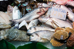 Raw fish. And other seafood on spanish market counter stock photo