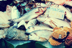 Raw fish. And other seafood on spanish market counter royalty free stock images
