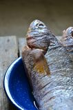 Raw fish ready for cooking. On a blue dish stock photo