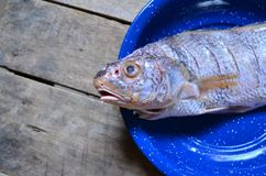 Raw fish ready for cooking. On a blue dish royalty free stock photo
