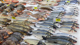 Raw fish ready for sale Royalty Free Stock Images