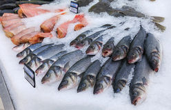 Raw fish ready for sale Stock Image