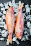 Raw fish, Red mullet fish on an ice cubes Stock Photo