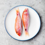 Raw fish, Red mullet fish on a white plate Royalty Free Stock Images