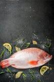 Raw fish red tilapia Stock Image