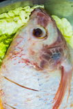 Raw fish. Red Tilapia fish prepare for cook Royalty Free Stock Photos