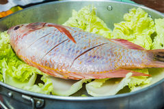 Raw fish. Red Tilapia fish prepare for cook Stock Images