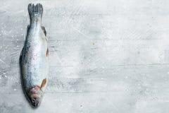 Raw fish salmon royalty free stock image